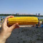 Лето 2021 года в ЖК Платовский. Фото 1.